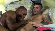 Interracial gay lovers take turns drilling each other's lovely asses